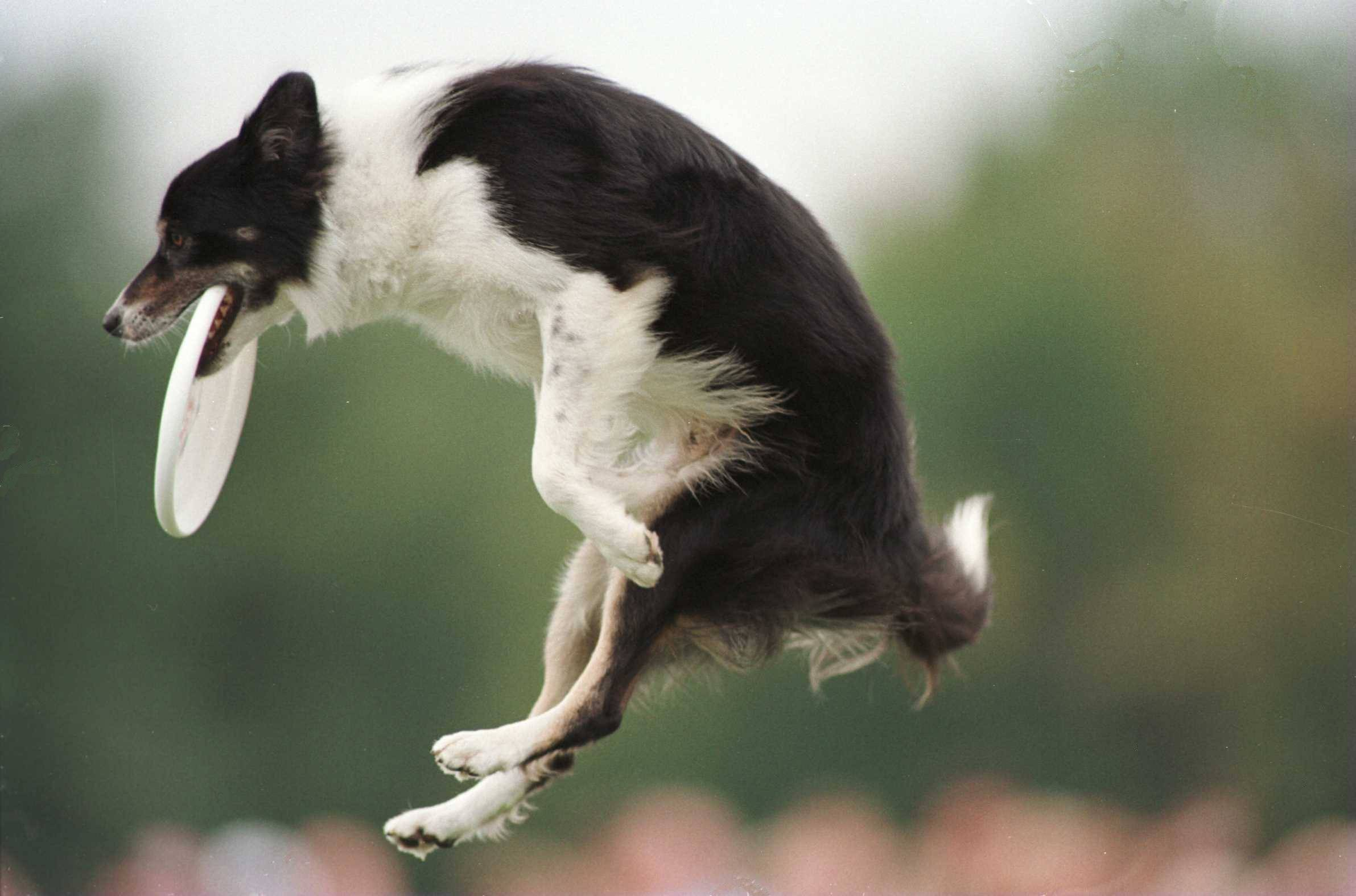 list of the top Dog Names and Dog Breeds Near Madison Square Park ...