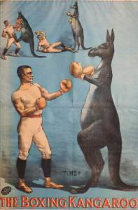 boxing kangaroo at kosters circus