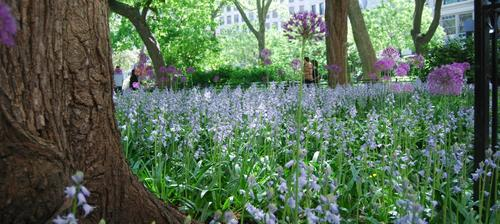 Come enjoy the weekly Madison Square Park Conservancy Hort Walks featuring experts on staff.
