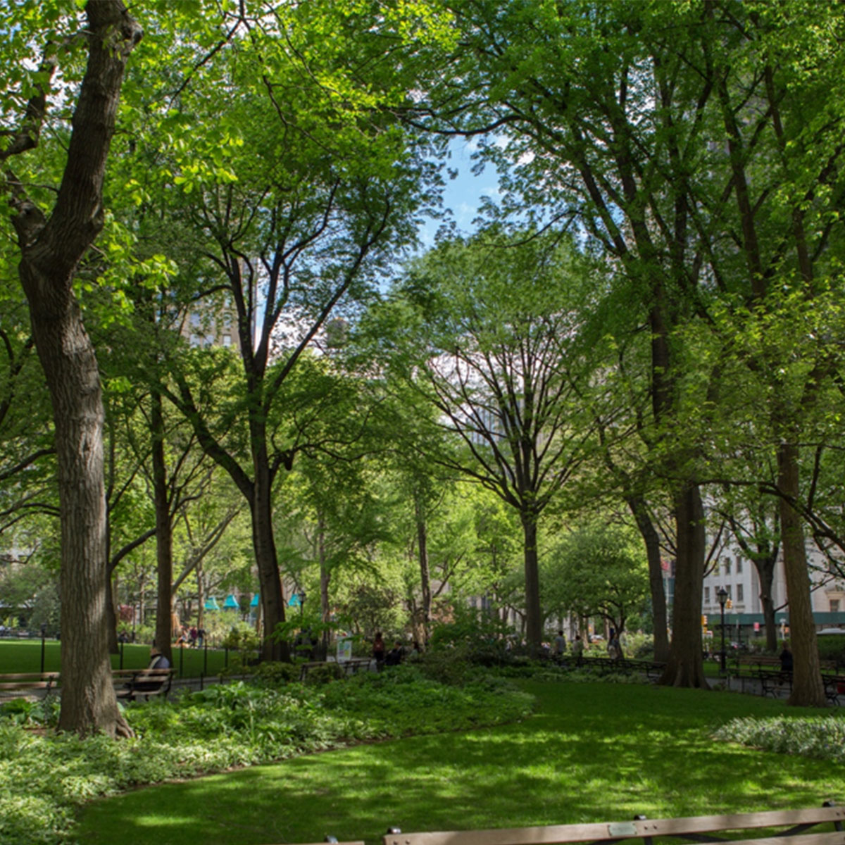 Celebrate Arbor Day at Madison Square Park